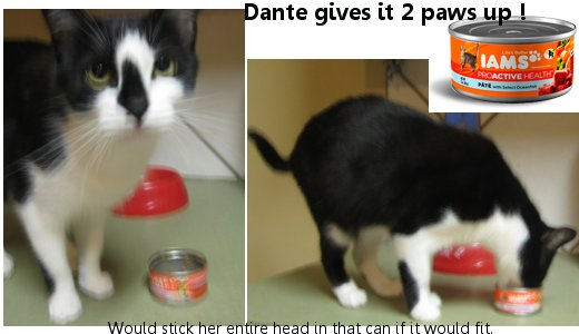 Dante gives IAMS 2 Paws up !