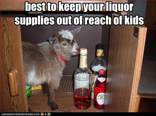 kid- goat, with liquor
