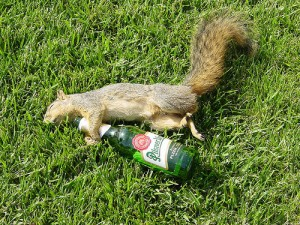a drunken squirrel