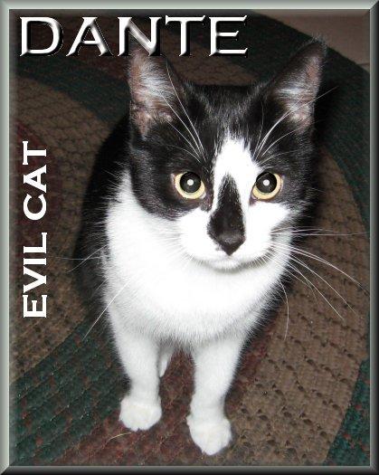 Dante the evil Cat