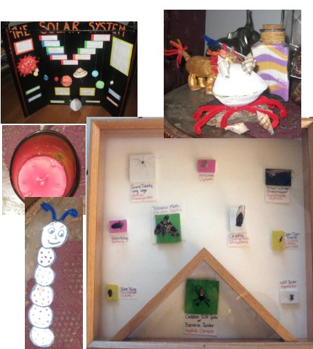 school project, shell critter, dough animal, sand art bottle, candle, bookmark and insect collection