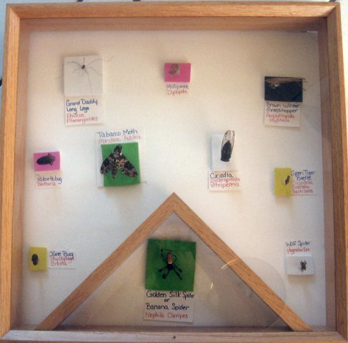 Bug display, phobias, freak outs, wine, silkwood showers