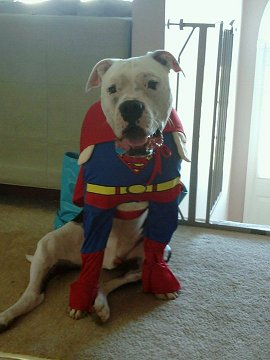 Super Winston from the Rachel Chronicles