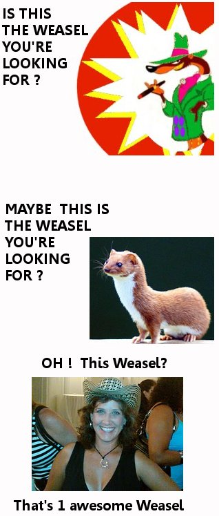 bonus weasel feature  go vote for weasel momma