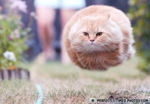 the latest in hover cat techology